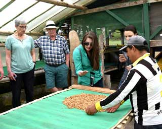 Learning about Andean coffee growing; Gualea, Ecuador