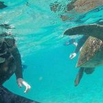 Swimming with Sea Lions on Pinzon Island, Galapagos